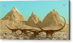 Diplodocus Dinosaur Herd Acrylic Print by Corey Ford