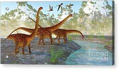 Diplodocus Dinosaur Morning Acrylic Print by Corey Ford