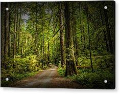 Dirt Road On Vancouver Island Acrylic Print