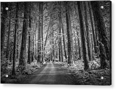 Dirt Road Through A Rain Forest In Black And White Acrylic Print