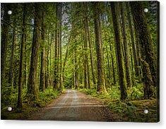 Dirt Road Through A Rain Forest On Vancouver Island Acrylic Print