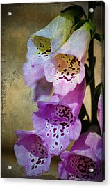 Dirty Belles Acrylic Print by Bill Cannon