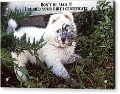 Dirty Dog Birthday Card Acrylic Print