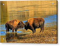 Acrylic Print featuring the photograph Discussing The Crossing by Adam Jewell