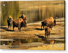 Acrylic Print featuring the photograph Discussing The River Crossing by Adam Jewell