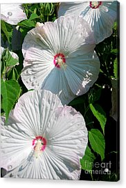 Dish Flower Acrylic Print by Brian Jones