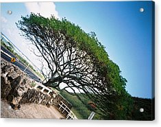 Acrylic Print featuring the photograph Disoriented Tree by Judyann Matthews