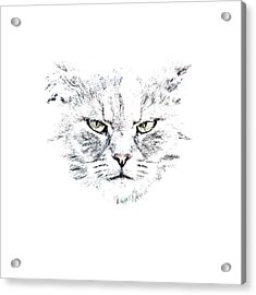 Disturbed Cat Acrylic Print by Everet Regal