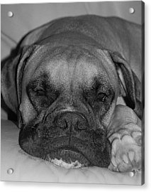Disturbing His Nap Acrylic Print by DigiArt Diaries by Vicky B Fuller