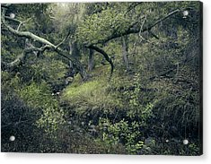 Acrylic Print featuring the photograph Ditch And Oaks by Alexander Kunz
