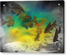 Dive Buddies Acrylic Print