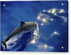 Dive Into The Blue Acrylic Print