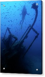 Diver Exploring The Dalton Shipwreck With A School Of Fish Swimming Acrylic Print by Sami Sarkis