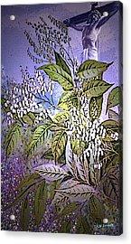 Divine Acrylic Print by Kenneth Lambert