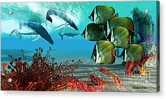 Diving Whales Acrylic Print by Corey Ford