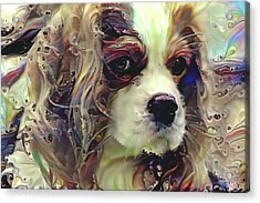 Dixie The King Charles Spaniel Acrylic Print