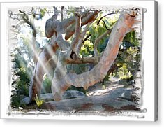 Do-00044 Mount Ettalong Acrylic Print