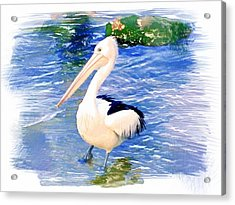 Do-00088 Pelican Acrylic Print