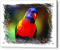 Do-00153 Colourful Lorikeet Acrylic Print
