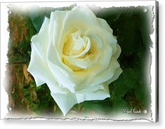 Acrylic Print featuring the photograph Do-00300 La Rose De Aaraya by Digital Oil
