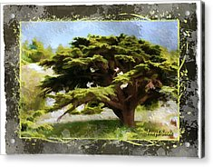 Do-00318 Cedar Barouk - Framed Acrylic Print