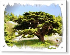 Do-00319 Cedar Tree Acrylic Print