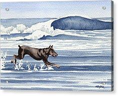 Doberman At The Beach  Acrylic Print by David Rogers