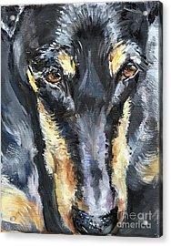 Doberman Oil Painting Acrylic Print