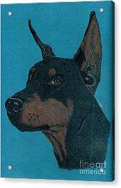 Acrylic Print featuring the drawing Doberman Pincher by Terri Mills