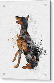 Doberman Pinscher Acrylic Print