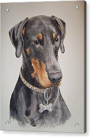 Dobermann Acrylic Print by Keran Sunaski Gilmore