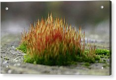 Acrylic Print featuring the photograph Dock Moss by Jack G  Brauer