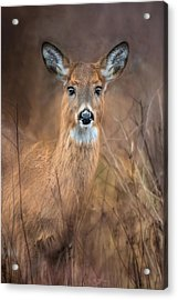 Acrylic Print featuring the photograph Doe A Deer by Robin-Lee Vieira