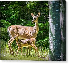Doe And Fawn Acrylic Print