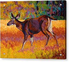 Doe IIi Acrylic Print by Marion Rose