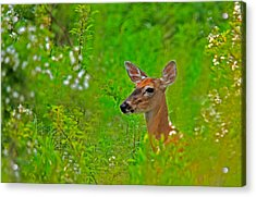 Acrylic Print featuring the photograph Doe In Springtime by William Jobes