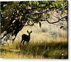 Doe In The Orchard Acrylic Print by Lisa Knechtel