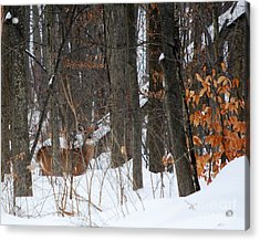 Acrylic Print featuring the photograph Doe In Woods by Lila Fisher-Wenzel