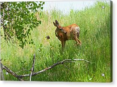 Doe Meets Bird 4 Acrylic Print