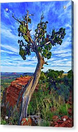 Doe Mountain Juniper Acrylic Print