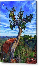 Doe Mountain Juniper Acrylic Print by ABeautifulSky Photography