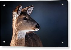 Doe Portrait - White Tailed Deer Acrylic Print by SharaLee Art