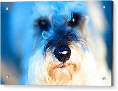 Dog 2 . Photo Artwork Acrylic Print by Wingsdomain Art and Photography