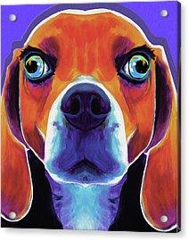 Basset Hound #01 By Nixo Acrylic Print