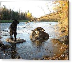 Dog And Cat Exploring Rocks Acrylic Print by Kent Lorentzen