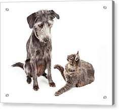 Dog And Cat Laying Together Looking Forward Acrylic Print