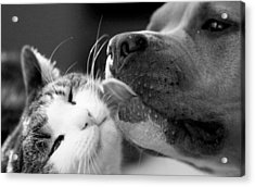 Dog And Cat  Acrylic Print