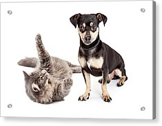 Dog Annoyed With Playful Cat Acrylic Print