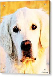 Dog Art - Golden Moments Acrylic Print by Sharon Cummings