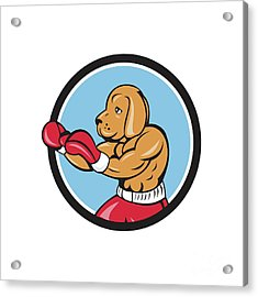 Dog Boxer Fighting Stance Circle Cartoon Acrylic Print by Aloysius Patrimonio